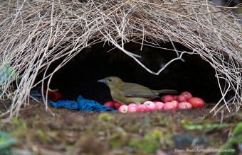 animal-architecture-nests-4-4