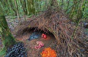 animal-architecture-nests-4-5