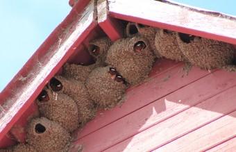 animal-architecture-nests-6-2