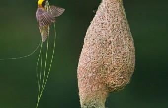 animal-architecture-nests-8-4