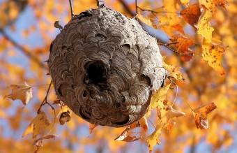 animal-architecture-nests-9-1