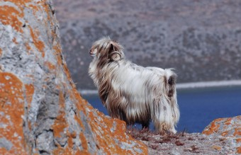 XX-Animals-That-Need-To-Get-A-Haircut-Real-Bad9__880
