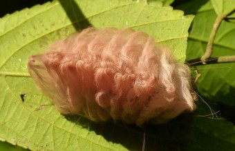 caterpillar-moth-butterfly-before-after-metamorphosis-12-1__880