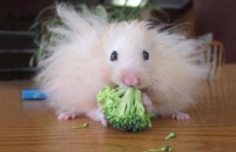 funny-hairy-animals-30__700