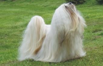 funny-hairy-animals-45__700