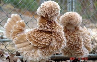 funny-hairy-animals-5