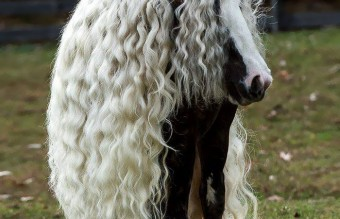 hairy-animals-10101__700