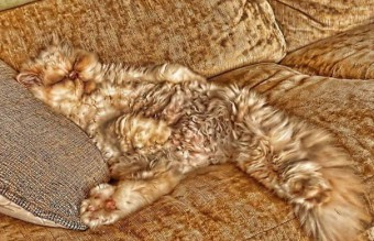 The-Best-Animal-Camouflage-Pics2__605