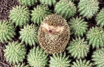 camouflage-animals-pets-funny-15__880