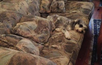 camouflage-animals-pets-funny-24__880