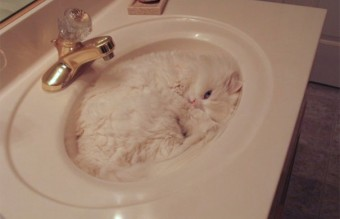camouflage-animals-pets-funny-29__605