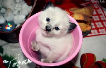 Cuteness-Explosion-Animals-In-Cups16__880