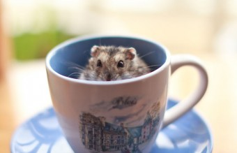 Cuteness-Explosion-Animals-In-Cups2__700