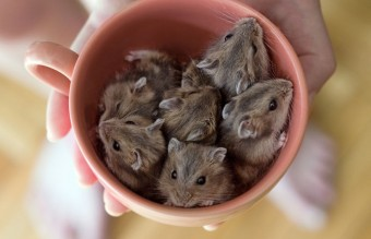 Cuteness-Explosion-Animals-In-Cups7__880