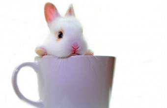 coffee-bunny-white-baby-2856-1334x907__880
