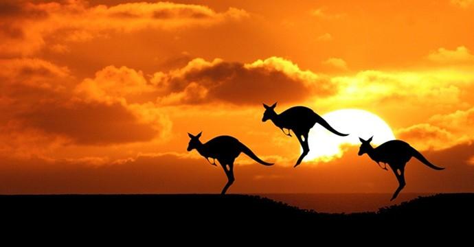 kangaroo-sunset-animals-iphone-ipad_250744