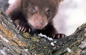 animals-and-first-snow-baby-bear__700