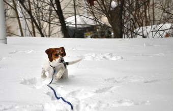 animals-and-first-snow-beagle-2