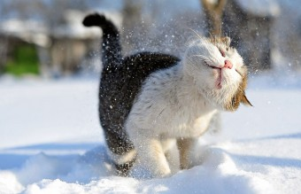 animals-and-first-snow-cat-2__700