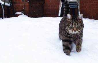 animals-and-first-snow-cat-4__700