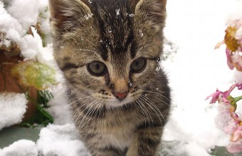 animals-and-first-snow-kitten2