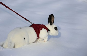 animals-and-first-snow-rabbit-2