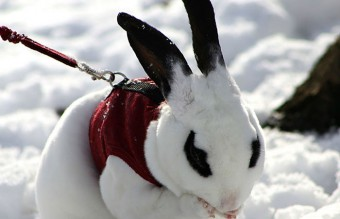 animals-and-first-snow-rabbit1