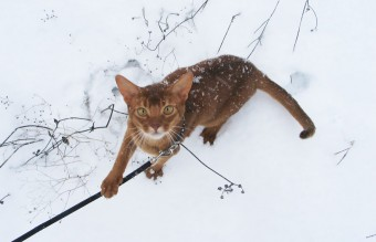 animals-first-time-seeing-snow-12__880