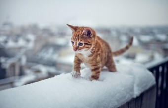 animals-first-time-seeing-snow-4__700