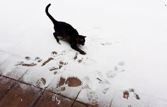 animals-first-time-seeing-snow-8