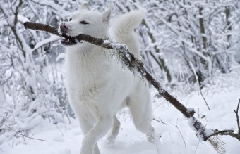 animals-playing-in-snow-for-the-first-time-103__880