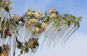 frozen-ice-art-13__880