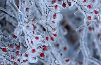 frozen-ice-art-15__880