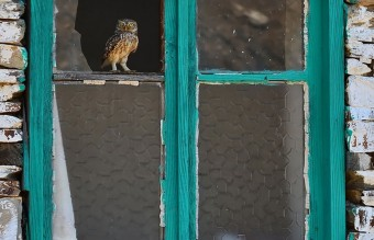 owl-photography-18__880