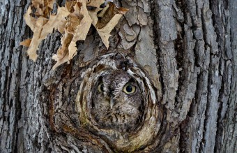 owl-photography-19__880
