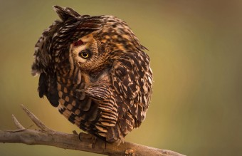 owl-photography-1__880