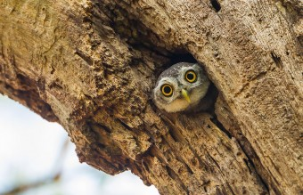 owl-photography-23__880