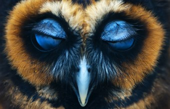 owl-photography-27__880