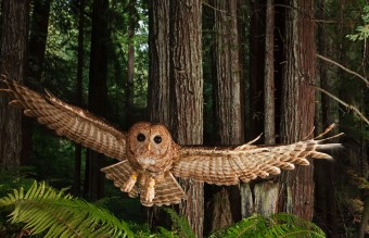 owl-photography-29__880