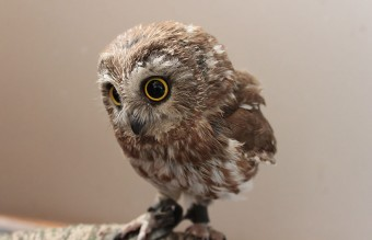 owl-photography-2__880