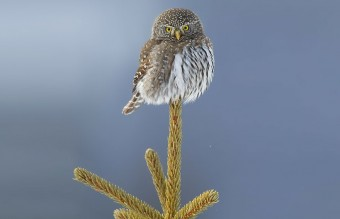 owl-photography-32__880