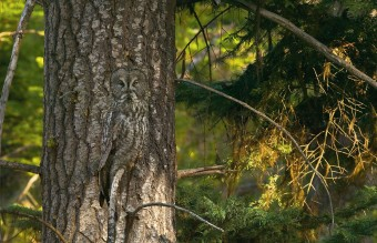 owl-photography-35__880