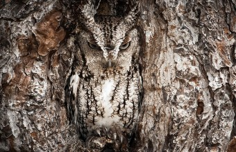 owl-photography-3__880