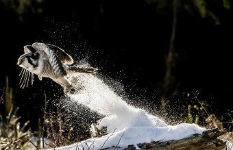 owl-photography-4__880