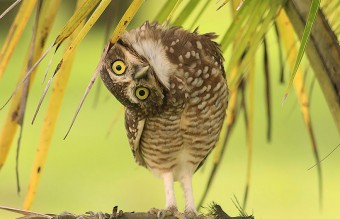 owl-photography-6__880