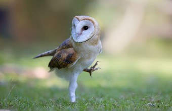 owl-photography-7__880