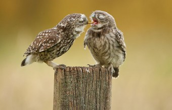 owl-photography-8__880