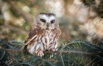 owl-photography-cute-104__880