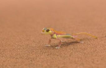 animal-sand-1716557-1920x1200__605