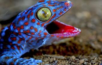cute-reptiles-106__605